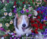 1147S-Petunias on the Yawn Sheltie Dog Face