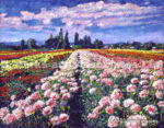 FIELDS OF DAHLIAS