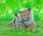 Rabbit and Shiba inu - Together 2