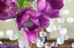 00005-Purple Tulip