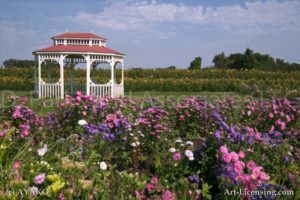 00012-Aster, Sunflower and Gazebo in flower Field