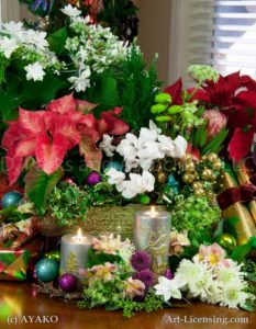00013-Christmas poinsettia,Cyclamen,Shooting Star Hydrangea, Candles