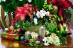 00018-Christmas Poinsettia,Cyclamen, Candles