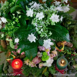 00026-Shooting Star Hydrangea, Red and Green Candles