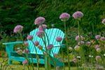 00031-Blue Banch-Allium-Garden