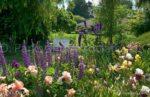00094-Rupin Iris White Bench in Flower Garden