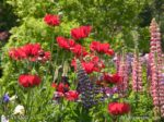 00115-Red Anemones-Snapdragons