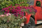 00121-Sanguna on Old Red Truck