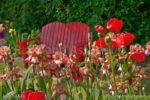 00140-Iris Amemone Flower Garden Red Bench
