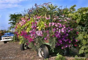 00183-Sanguna Flowers-Wagon Truck