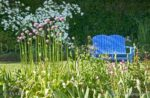 00193-Blue Bench-Allium-in the Garden