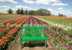 0044-Green Bench in the Tulip Field