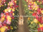 0062-Dog in the Tulip Field