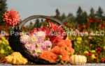 0095-Dahlia Bouquets with Pumpkins