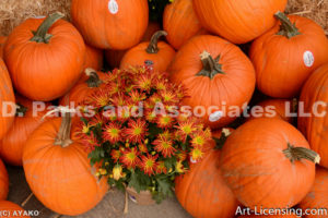 0239-Pumpkins and Mums