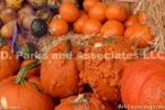 0286--Pumpkins
