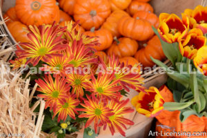 0461-Pumpkins Mums and Tulips