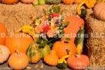 0539-Dahlia Bouquet and Pumpkins