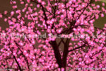 1288-Cherry Blossom Lighting