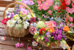 1705-Flowers in the Basket