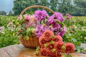 1950-Dahlia Bouquet