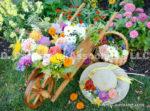 2345-Dahlia and Flowers-Straw Hat-Wheel Barrow-Summer