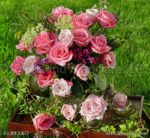 2772-Pink Roses
