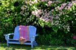 3765-Blue Bench in the Garden