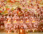 4073-Cherry Blossom and Candles