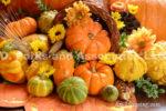 4234-Fall-Mums-Pumpkins