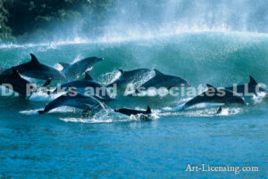Large Dolphin Pod