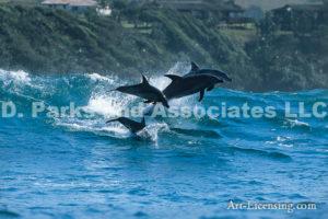 Silouehette Dolphins
