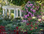 4507-Gazebo Rose Garden