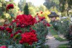4876-Garden