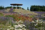 5134-Lavender Garden-Gazebo