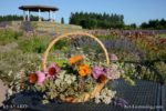 5149-Lavender Garden-Basket Flowers-Gazebo