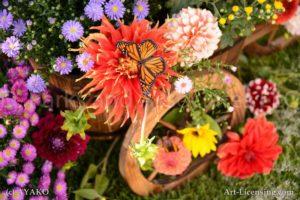 6854-Dahlia-Butterfly