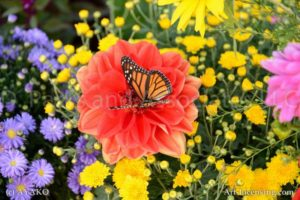 6869-Red Dahlia Butterfly