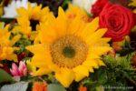 7762-Sunflower