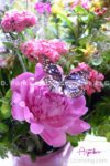 8242S-Pink Peony and Butterfly