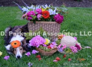 8284S-Peony-Garbela-Flower Basket-Straw Hat