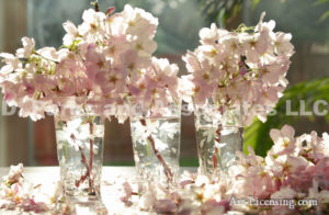 9453-Cherryblossom in Glass cups