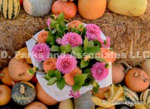 Dahlias and Pumpkins