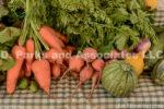 9642-Vegetables