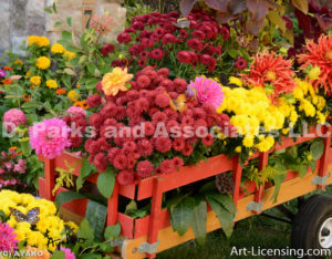 9711-Dahlias and Mums on the Wagon-w signature