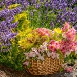 Flower Basket in Lavender Field