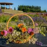 Flower Basket in Lavender Field with Gazebo