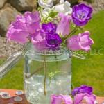 Bell Flowers in Jar