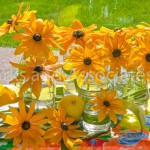 Yellow Rudbeckia in glasses