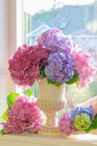Hydrangea Bouquet by the window